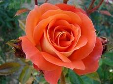 La Plus Fleur Du Monde