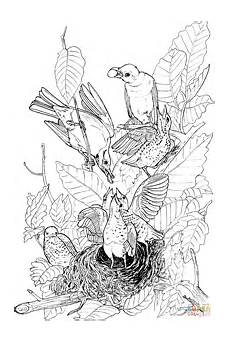 Robin Malvorlagen Pdf Robin Nest And Babies Pages Printable Coloring Pages