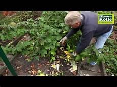 himbeeren zur 252 ckschneiden im herbst i pflanzen k 246 lle