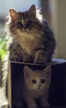 161 arriba o dentro la cuesti 243 n es la caja gatos gatos graciosos y animales