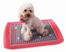 tappeto per cani pip 236 lettiera per cani tutto ze