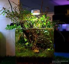 nano cube aquascape aquarium landscape tropical fish