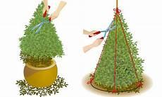 buchsbaum schneiden selbst de