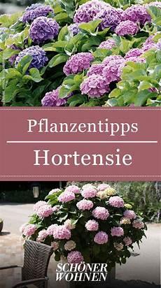 hortensien pflanzen pflegen vermehren garden ideas