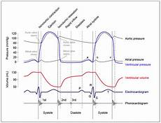 Cap Cycle Diagram by Hypocaffeinic Licensed For Non Commercial Use Only
