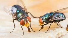 Stechmücken Bekämpfen Schlafzimmer - l 228 stige fliegen wirksam vertreiben und bek 228 mpfen