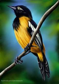 simbolos naturales de puerto cabello turpial venezuela