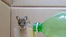 Trappola Per Topi Con Una Bottiglia Di Plastica