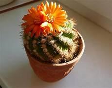 Wie Oft Kakteen Gießen - mini kakteen pflanzen botanik kaktus