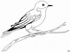 singvogel ausmalbild malvorlage tiere