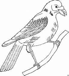 Malvorlage Vogel Auf Ast Vogel Auf Ast 3 Ausmalbild Malvorlage Tiere