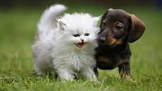 wie wird mäuse los quot wie hund und katz quot k 246 nnen hunde und katzen freunde