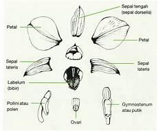 Morfologi Anggrek El Filaha