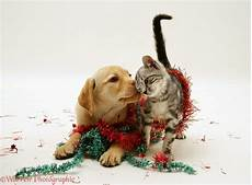 give your pet a safe and merry christmas bay vets