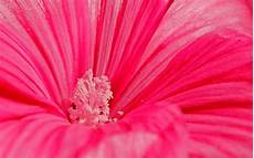 flower wallpaper for background flower 51 colorful pink pastel 09nov2014sunday