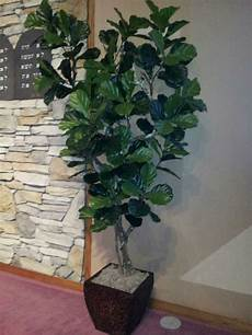 artificial trees and artificial plants from artificial bloom home d 233 cor in san diego ca