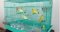 gabbia cocorite gabbia per canarini il contenuto di canarini in casa