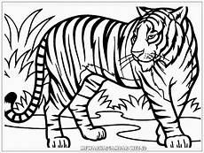 16 Gambar Kartun Harimau Sumatera Gambar Kartun Ku