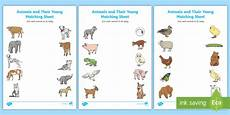 animals and their youngs worksheets 14094 free animals and their babies made twinkl