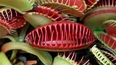 Fleischfressende Pflanzen Pflegen Ndr De Ratgeber