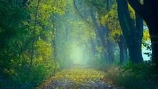 Nature Path 4k Wallpaper wallpaper 3840x2160 autumn path fog foliage