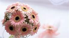 dei fiori battesimo fiori battesimo quali scegliere