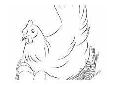 Gambar Ayam Betina Untuk Diwarnai Belajarmewarnai Info