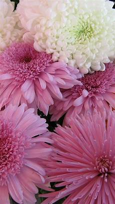 flower wallpaper iphone 6 plus 189 best images about iphone 6 plus wallpapers ideas on