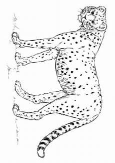 ausmalbilder gepard 2 ausmalbilder tiere