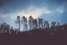 33 Gambar Pemandangan Hutan Malam Hari Pemandangan
