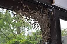 bienen im rolladenkasten hilfe die bienen schw 228 rmen der bienenblog