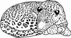 Ausmalbilder Erwachsene Leopard Desenhos Para Colorir De Leopardos Desenhos De Animais