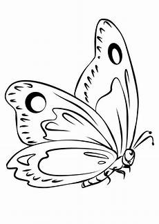 schmetterling malbuch seiten popular coloring pages