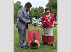 Blekinge Kennelklubbs internationella hundutställning 2013