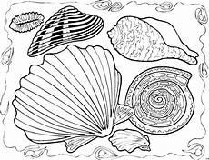 Ausmalbilder Verschiedene Tiere Verschiedene Muschelarten Ausmalbild Malvorlage Tiere