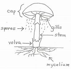 what makes a fungus a fungus jake s nature
