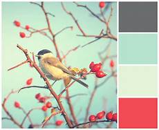 create a color palette picmonkey