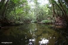 Air Yang Jernih Di Aliran Sungai Hutan Hujan