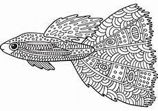 fisch 4 ausmalbilder f 252 r erwachsene