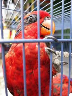 Eulen Malvorlagen Jogja Yogyakarta Die Indonesier Haben Nen Vogel Today We Travel
