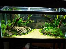 Adventures In Aquascaping