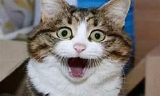 Wow Gemes Inilah Gambar Anak Kucing Yang Lucu Dan Imut