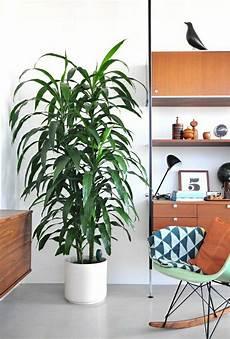 moderne zimmerpflanzen als frische deko f 252 rs zuhause