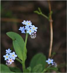 Lunas Garten Vielfalt Blumen Im April