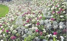 Couvre Sols Et Talus Vente Plantes Couvre Sol Et Plantes