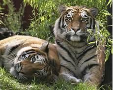 les animaux en voie de disparition les 10 animaux en voie de disparition