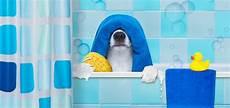 Hundegeruch Entfernen Wohnung - hundegeruch aus wohnung entfernen diese tipps helfen
