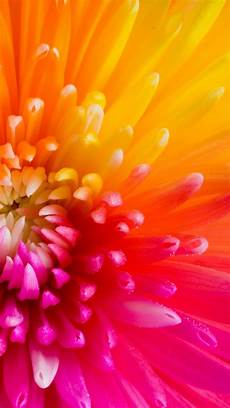 yellow flower wallpaper iphone beautiful colourful flower petals collection of 47 macro