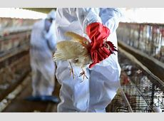 number of deaths from bird flu