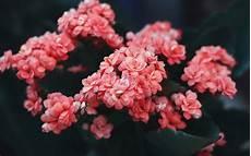 Flower Wallpaper Laptop by Wallpaper 3840x2400 Flowers Pink Bloom Bush